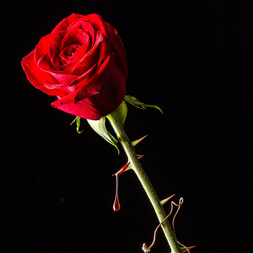 roses-and-thorn-