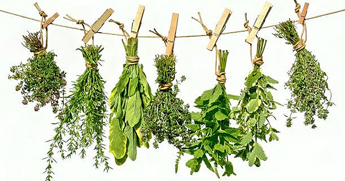 healing-herbs pemf