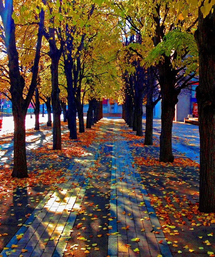 walking through the last of autumn  by Annie O'Reilly - Novices Only Street & Candid