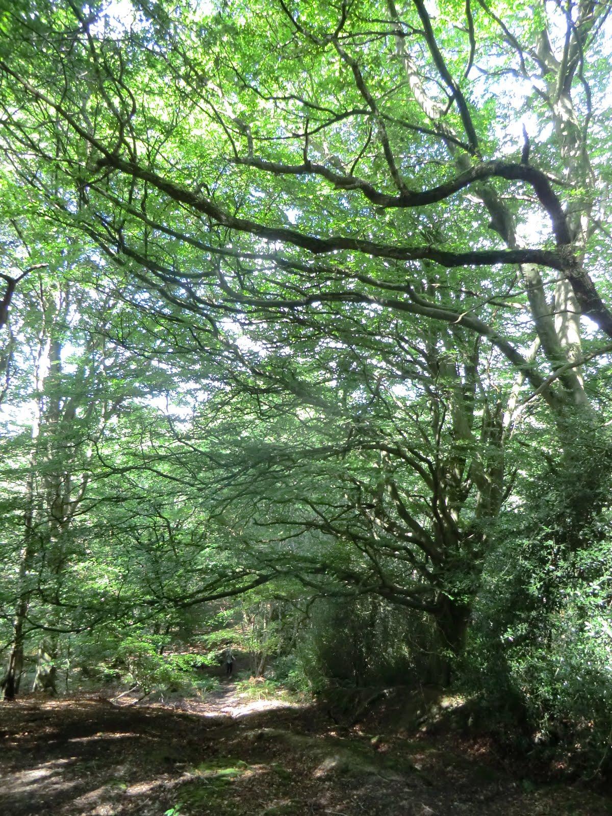 CIMG3423 Climbing through Stumblewood Common