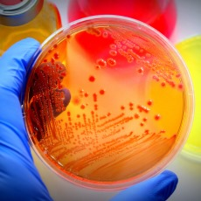 e coli infection