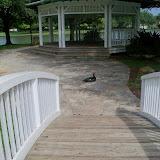 Park at New Territory - 116_3476.JPG