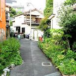 streets of Harajuku in Harajuku, Tokyo, Japan