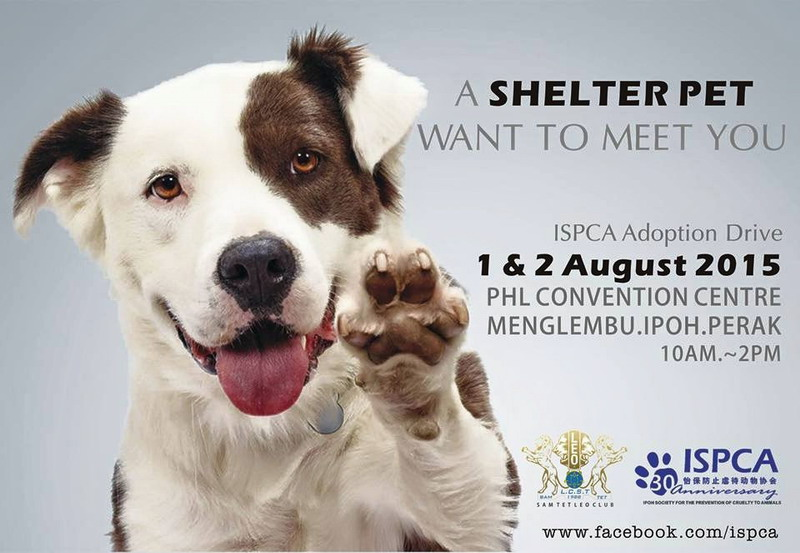 Announcement: ISPCA Pet Adoption Drive in Menglembu