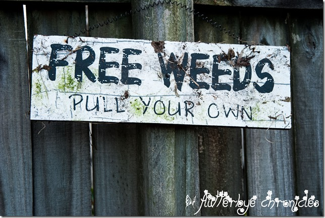 weed sign in our yard January 16th