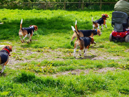 The Beagle Welfare Rehoming Centre