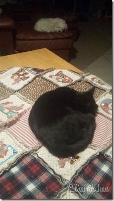 duncan (quilt cat) (1)