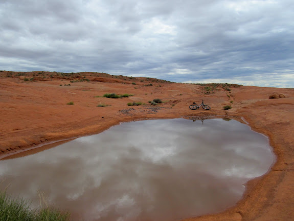 One of several pools in the slickrock title=