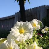 Gardening 2012 - IMG_3155.JPG