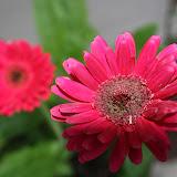 Gardening 2012 - IMG_2768.JPG