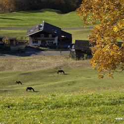Karersee Singletrailtour 27.10.16-8187.jpg