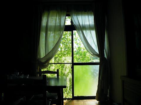 最盛期のゴーヤのカーテン