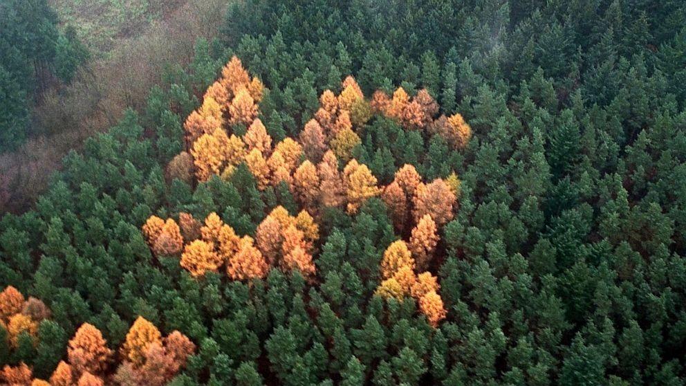 forest-swastika