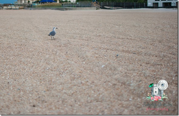WW October 10th bird at beach (© Jenny @ Flutterbye Chronicles)