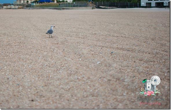 WW October 10th bird at beach (© Jenny @ Flutterbye Chronicles)
