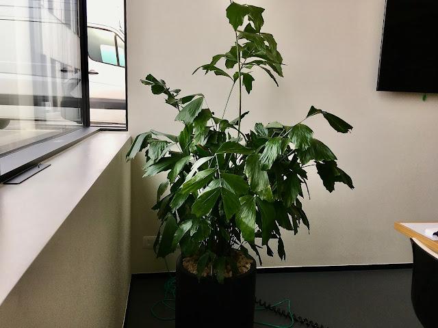 Grote goedkope kamerplanten soorten die goed zon verdragen met bloemen en luchtzuiverend zijnen weinig onderhoud vragen en plantenbakken op poten