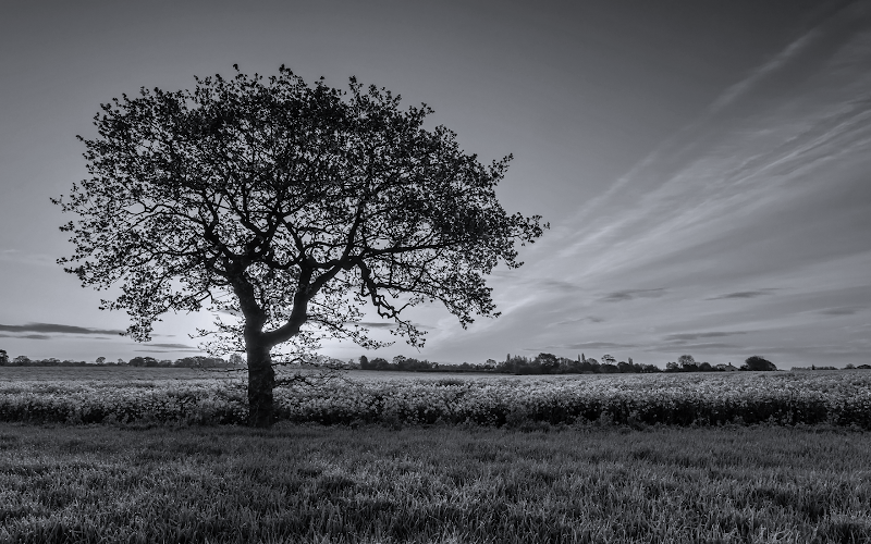 black and white sunset field wallpaper