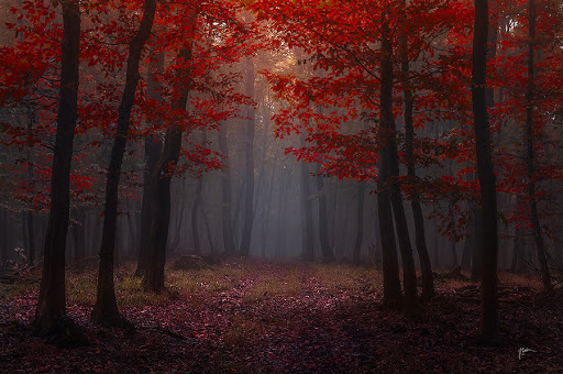 lost_red_story__by_janek_sedlar-d6mt3kh-2013-03-15-07-05.jpg