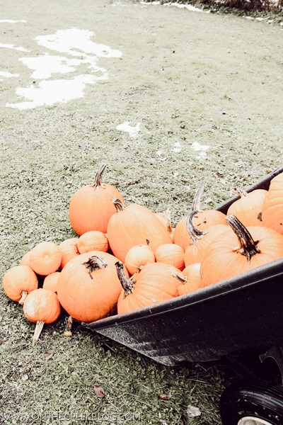 Pumpkins in the wagon!