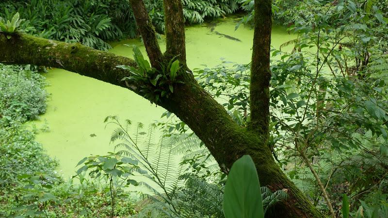TAIWAN A cote de Luoding, Yilan county - P1130529.JPG