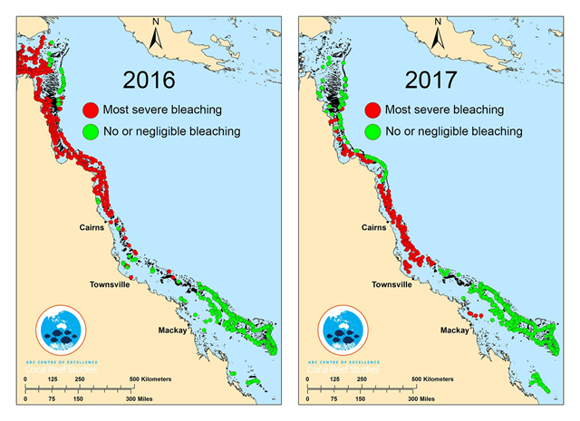 This composite map shows surveyed coral reefs in 2016 (left panel) and 2017 (right panel). Not all data are shown, only reefs at either end of the bleaching spectrum: Red circles indicate reefs undergoing most severe bleaching (60 percent or more of visible corals bleaching); Green circles indicate reefs with no or only minimal bleaching (10 percent or less of corals bleaching). Graphic: ARC Centre of Excellence for Coral Reef Studies