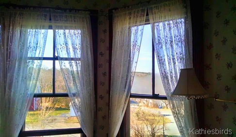 5. 5-3-15 Lace curtains