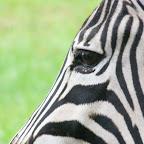 South Africa, Safari, Overland Trip, Honey Moon