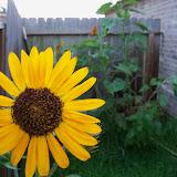 Gardening 2010, Part Three - 101_3984.JPG
