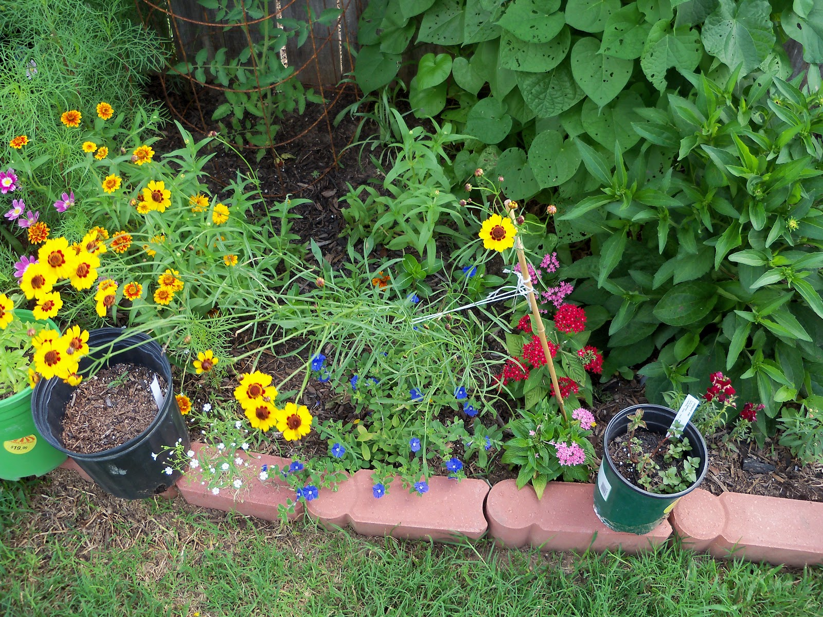 Gardening 2010, Part Three - 101_3734.JPG