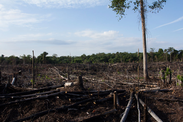 Burnt and degraded forest within Tesso Nilo National Park, Riau Province, Sumatra, Indonesia. Photo: World Bank / Flore de Preneuf