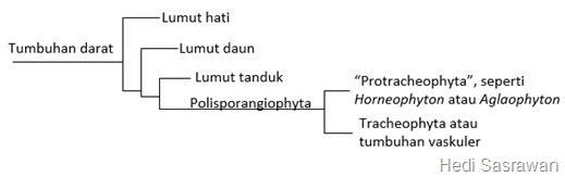 Diagram tumbuhan darat