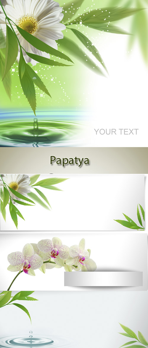 Gerbera, orchids, green leaves and water - vector backgrounds (papatya)