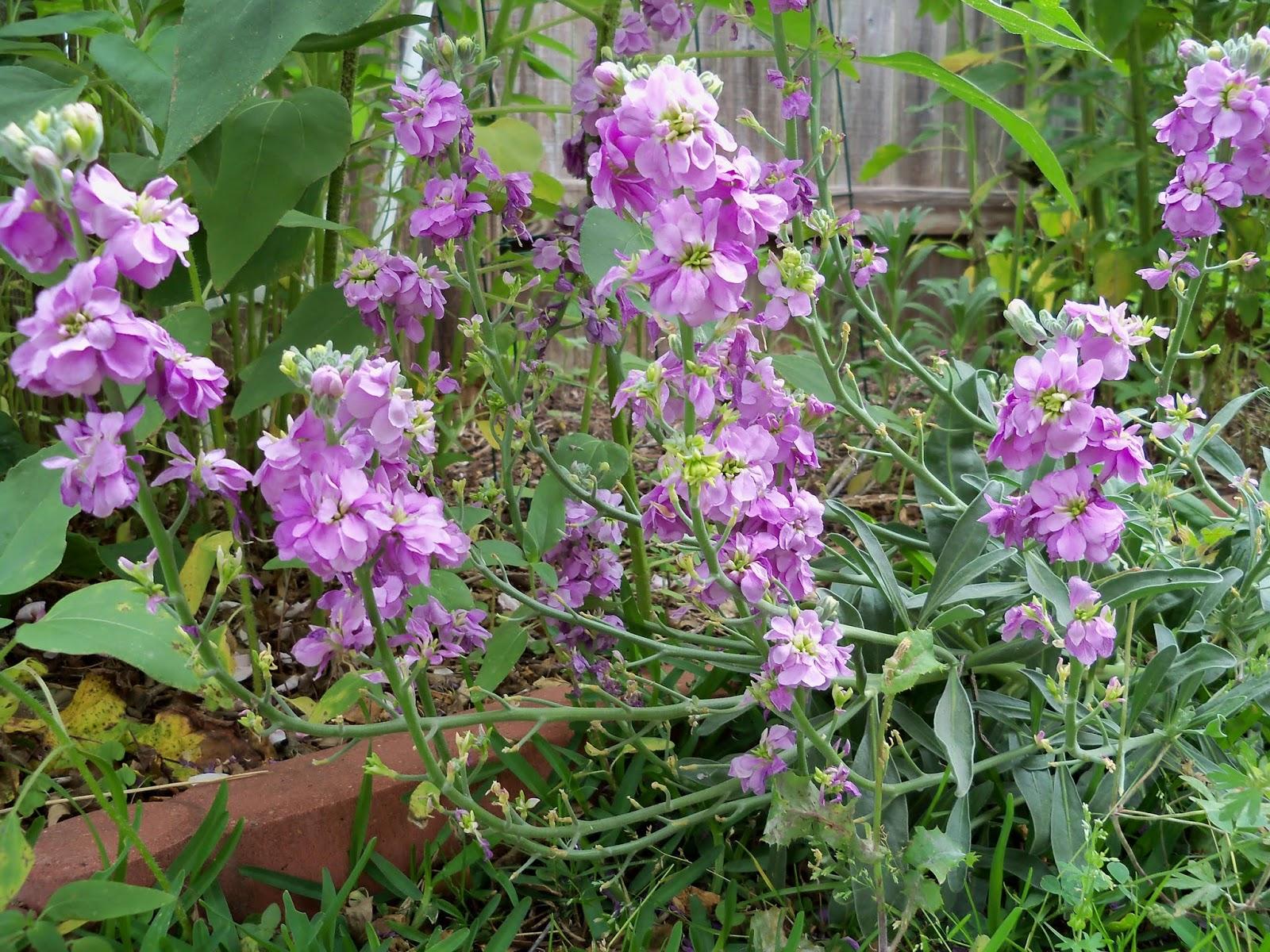 Gardening 2013 - 115_6031.JPG