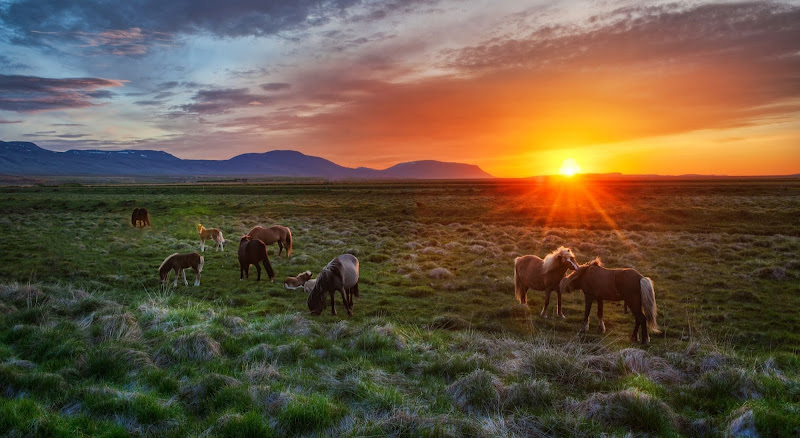 Trey Ratcliff - A Tableau Vivant of Horses in Icel…