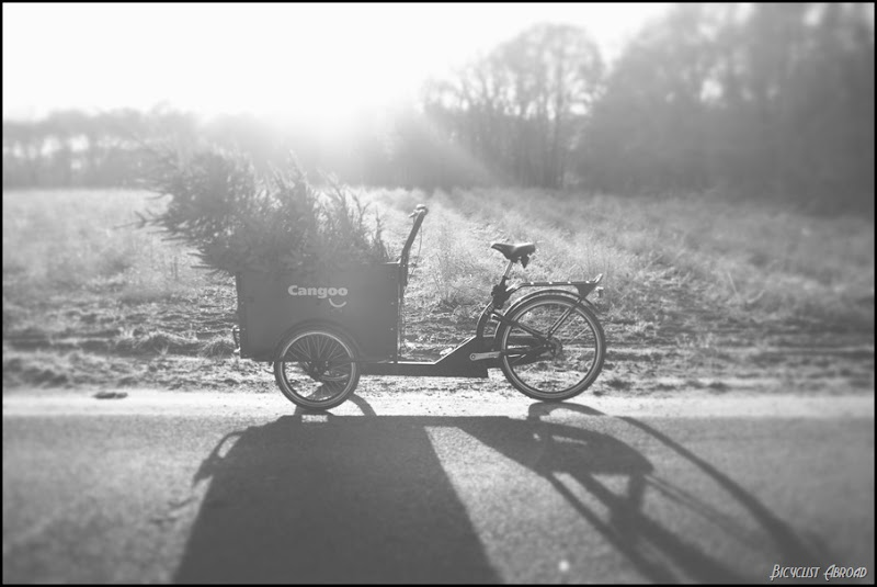tree in bakfiets 2