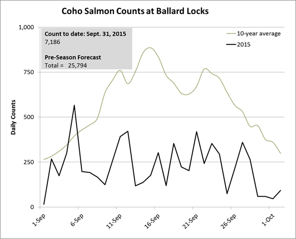 Coho salmon count at locks in Ballard, September 2015. Graphic: Washington Department of Fish and Wildlife