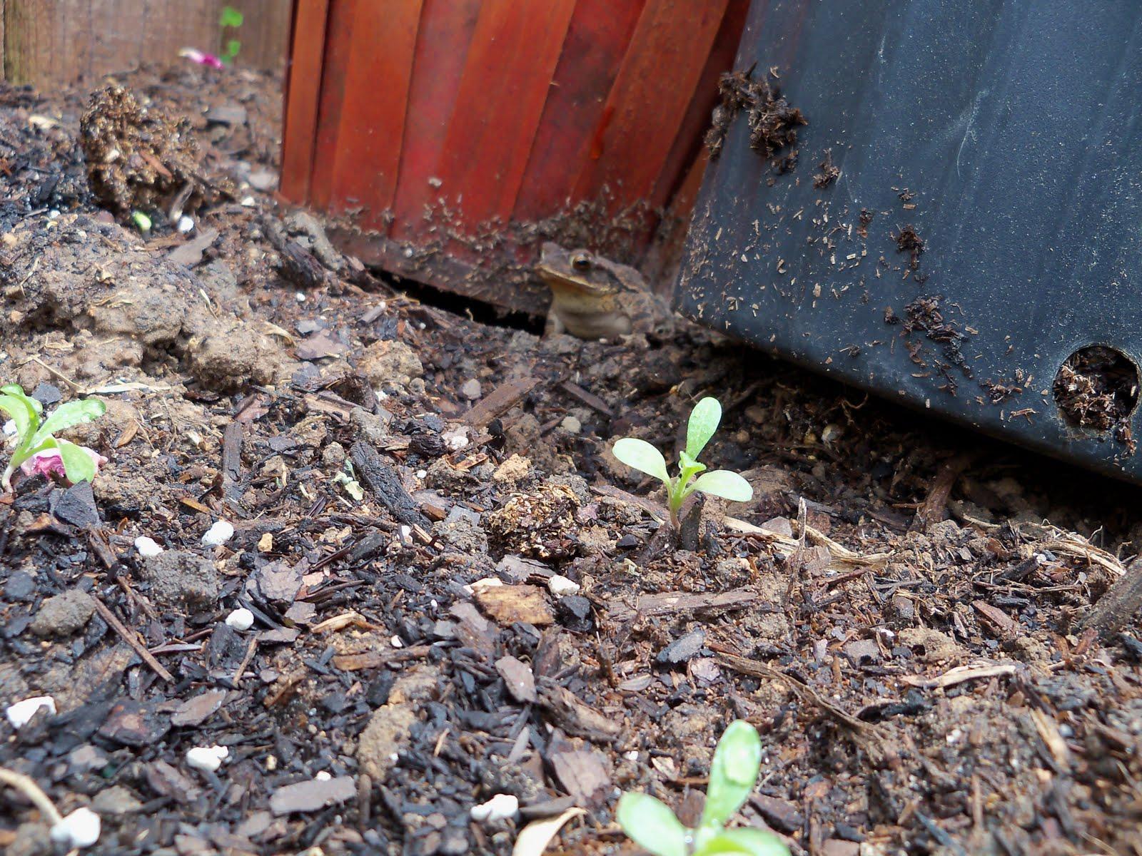 Gardening 2010 - 101_1043.JPG