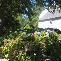 Botswana - Vinyard flowers.JPG