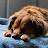 Garrett Van Sickle avatar image