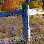 Fence in the fall.jpg