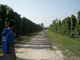 The access road to the degree college