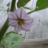 Gardening 2010, Part Two - 101_2410.JPG