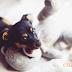 Ảnh hưởng của thuốc mê lên chó mèo như thế nào