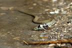 C'EST UN BEBE GRENOUILLE, IL CROYAIT QU'IL ETAIT TOT, ET ENFAIT... IL EST TETARD... A petite couleuvre, petite grenouille...