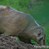 05-11-12 Wildlife Prairie State Park IL - IMGP1627.JPG