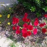 Gardening 2012 - 115_1711.JPG