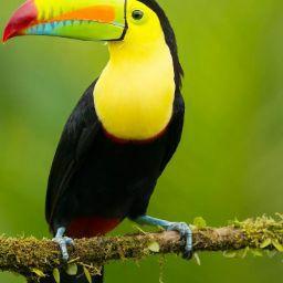 user Hema N apkdeer profile image