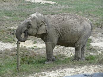 2018.08.25-017 éléphant d'Asie
