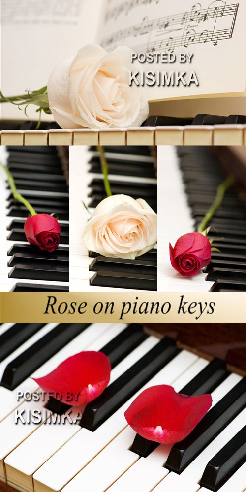 Stock Photo: Rose on piano keys
