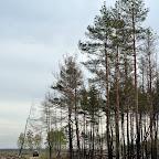 Помощь Воронежским лесам 006.jpg